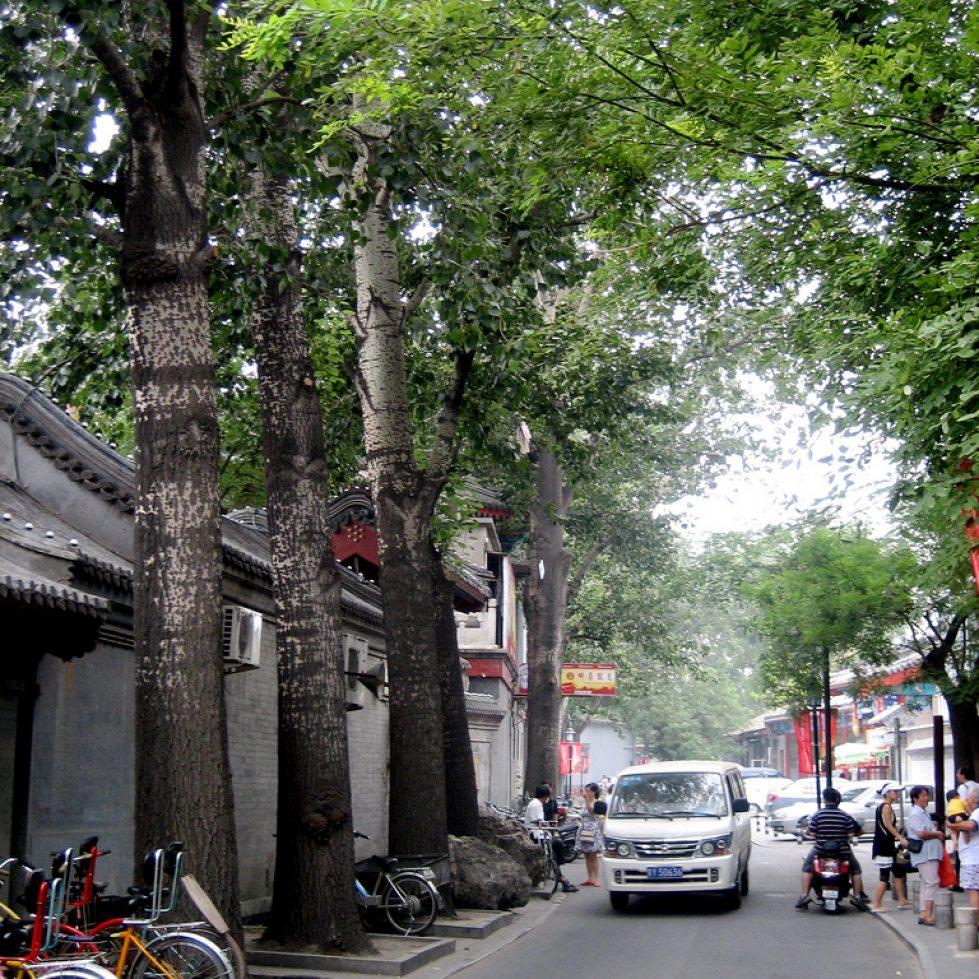 Hutopolis, city visions, urban green, hutong, spring, beijing